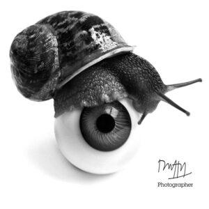 Duffy Snail & Eye T-Shirt